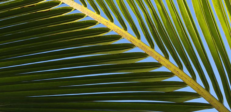 L'OCCITANE está involucrado para un aceite de palma más sostenible