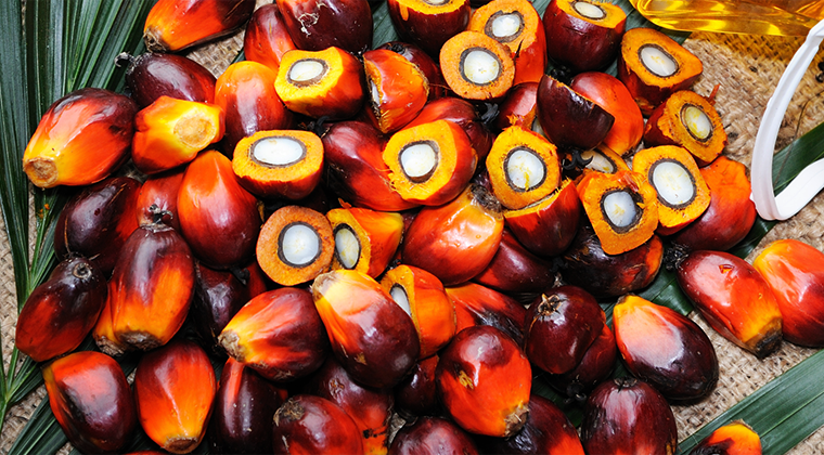 Palm Oil Statement.L'OCCITANE 歐舒丹