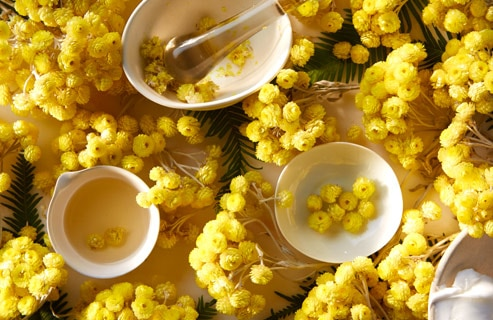 [VIDEO] Immortelle, The Flower of A Thousand Benefits