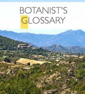 Botanist Glossary
