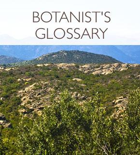 Botanist's Glossary