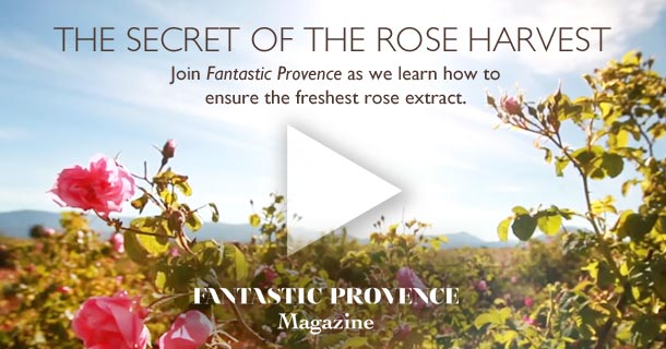 Join Fantastic Provence as we learn how to ensure the freshest rose extract.