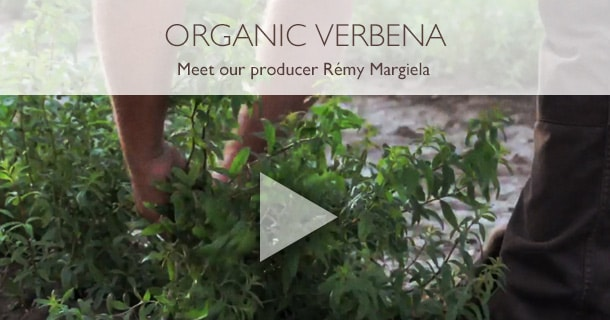 ORGANIC VERBENA. Meet our producer Rémy Margiela.