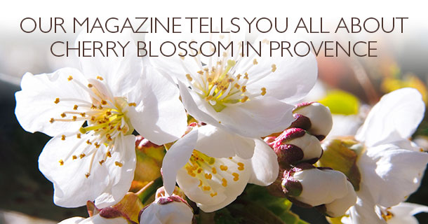 Our magazine tells you all about cherry blossom in Provence