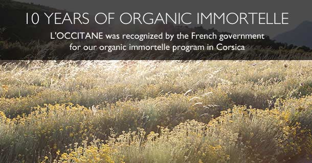 L'OCCITANE was recognized by the French government for our organic immortelle program in Corsica