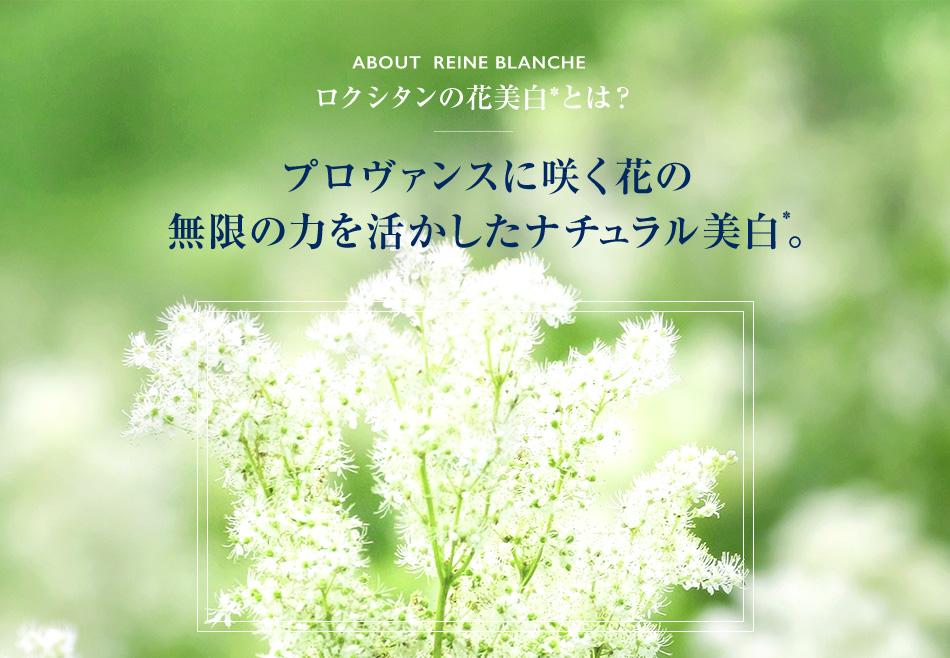 ABOUT  REINE BLANCHE ロクシタンの花美白*とは?プロヴァンスに咲く花の 無限の力を活かしたナチュラル美白。